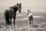 Mustang Foals