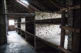 Birkenau Bunkhouses