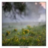 fog_landscapes