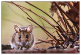 Tiere, Haustiere   - Animals - Domestic animals and wild-life