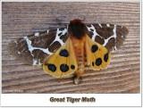Moths (Lepidoptera)  (24 Galleries)