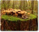'Tabletop mushrooms'
