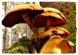 Mushrooms, moss and leafhopper