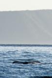 2796 Whale