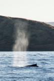 2799 Whale