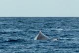 2856 Whale