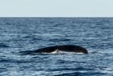 2859 Whale