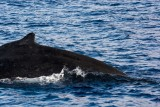3016 Pacific Whale Foundation Cruise