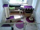 1-Kaninchenzimmer-2.jpg
