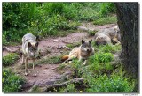 a77-09970-wolfs-sm.JPG