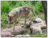 a77-09961-wolfs-sm.JPG