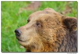 a77-13198-bear2-sm.JPG