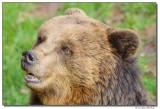 a77-13197-bearportrait-sm.JPG