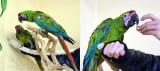 parrots3.jpg