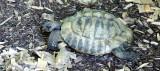 DSC03614-tortoise-epspc.JPG