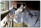 DSC03583-donkey2-sm.JPG