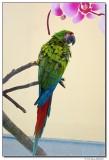 DSC03606-parrot2-sm.JPG