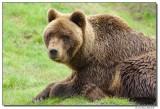 DSC03565-bear-sm.JPG