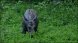 Moose in my garden