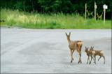 deer family 1024.jpg