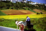 The Old Man On the Donkey Cart