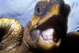 Turtle's Mouth