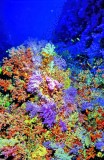 The Soft Corals Bottom