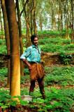 Proud Rubber Plantation Caretaker