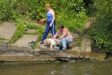 Bathing the Dog in a Public River: How British!...