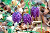 Strange Wild Flowers