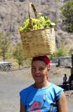 Bringing The Grapes