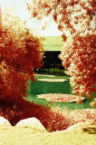 Gulbenkian Gardens In IR