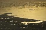 Obidos Lagoon, Berlengas And Peniche