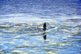 Lone Fisherman Walking In Low Tide
