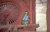 Expressive Monkey On Historical Building