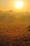 The Sun Rises In The East On The Yamuna Fields