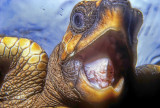 Turtle HDR