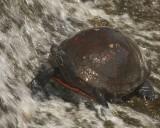 turtle shower