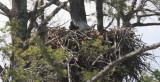 Wisconsin Breeding Bird Atlas
