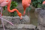 Audubon Zoo 2013
