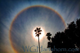 Circular Rainbow Palms Refraction