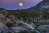 Joshua Tree Moonrise