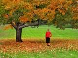Autumn NSYNC