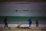 Adventurous Carmel Dolphins