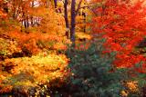 Autumn White Mountains