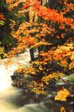 Creekside Autumn II