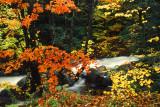 Franconia Notch Creek