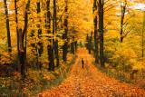Autumn Backroads