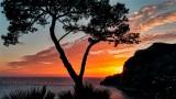 Capri Lone Cypress