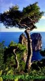 Cypress to Faraglioni Rocks